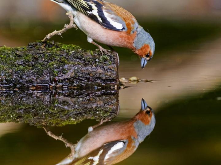 Lo Specchio Ricomposto